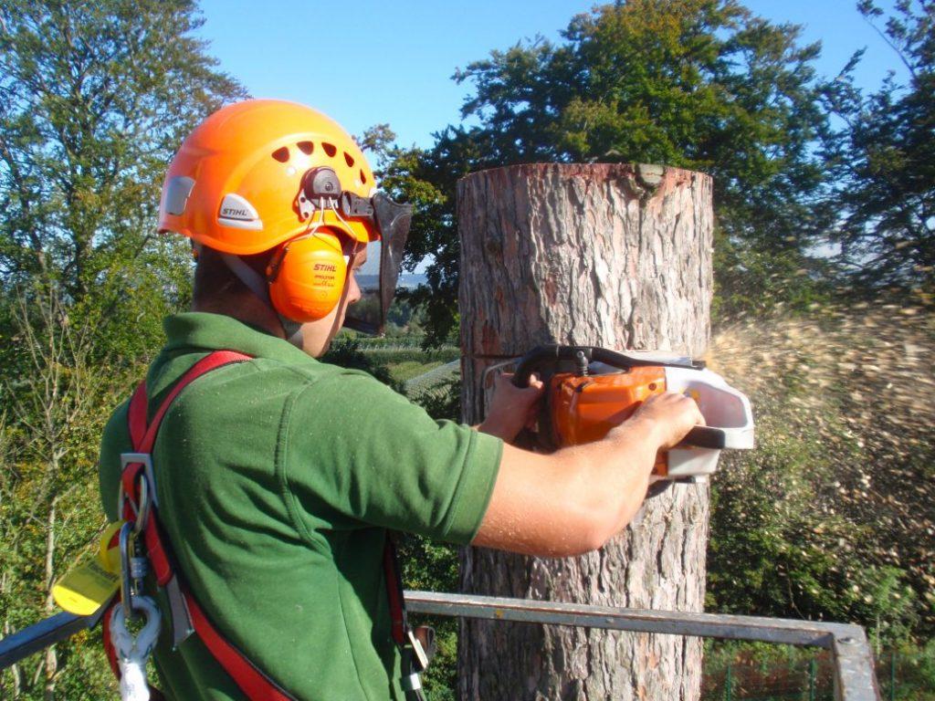 Tree Trimming San Antonio